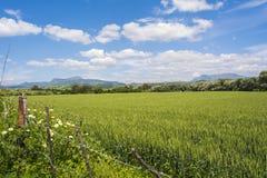 Paesaggio naturale, valle, grano non maturo più hardvest Fotografia Stock Libera da Diritti