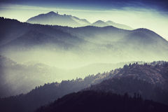 Paesaggio nebbioso Immagine Stock