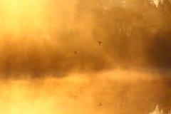 paesaggio nebbioso illustrazione vettoriale