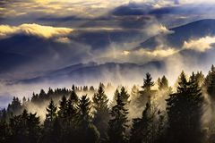 Paesaggio nebbioso con gli alberi Fotografia Stock