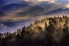 Paesaggio nebbioso con gli alberi Fotografie Stock
