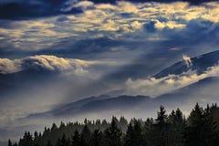 Paesaggio nebbioso con gli alberi Immagine Stock