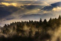 Paesaggio nebbioso con gli alberi Fotografia Stock Libera da Diritti