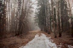 Paesaggio nebbioso con la foresta al primo mattino fotografie stock libere da diritti