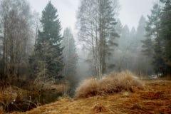Paesaggio nebbioso con la foresta ed il fiume alla mattina immagine stock libera da diritti