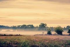 Paesaggio nebbioso del prato fotografia stock