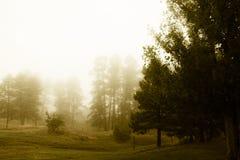 Paesaggio nebbioso del primo mattino Fotografia Stock Libera da Diritti