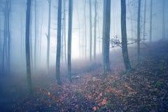 Paesaggio nebbioso dell'albero forestale fotografie stock