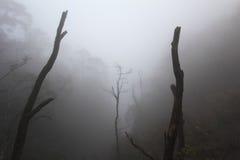 Paesaggio nebbioso della foresta Immagini Stock Libere da Diritti