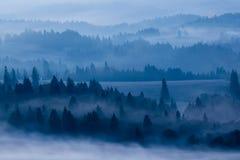 Paesaggio nebbioso della foresta immagine stock