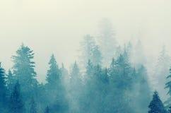 Paesaggio nebbioso della montagna fotografia stock libera da diritti