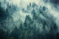 Paesaggio nebbioso della montagna fotografie stock libere da diritti