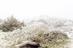 Paesaggio nebbioso di inverno Fotografie Stock Libere da Diritti