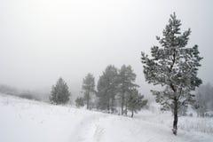 Paesaggio nebbioso di inverno Fotografie Stock