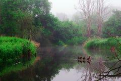 Paesaggio nebbioso di mattina fotografia stock libera da diritti