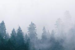 Paesaggio nebbioso di mattina Fotografia Stock