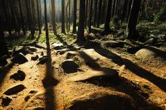 Paesaggio nebbioso in foresta immagini stock