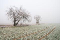 Paesaggio nebbioso misterioso del campo di inverno Immagine Stock