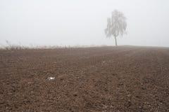 Paesaggio nebbioso misterioso del campo di inverno Immagini Stock