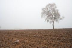 Paesaggio nebbioso misterioso del campo di inverno Immagini Stock Libere da Diritti