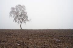 Paesaggio nebbioso misterioso del campo di inverno Fotografia Stock