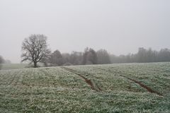Paesaggio nebbioso misterioso del campo di inverno Immagine Stock Libera da Diritti