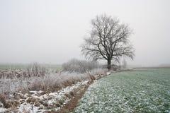 Paesaggio nebbioso misterioso del campo di inverno Fotografie Stock Libere da Diritti