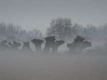 Paesaggio nebbioso su una mattina molto fredda Fotografie Stock