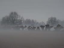 Paesaggio nebbioso su una mattina molto fredda Immagini Stock