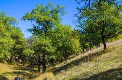 Paesaggio negli altopiani Fotografia Stock