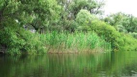 Paesaggio nel delta di Danubio stock footage