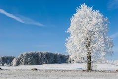 Paesaggio nel gelo Fotografia Stock