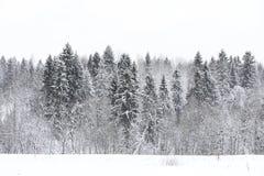 Paesaggio nel giorno nuvoloso di inverno Fotografia Stock