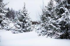 Paesaggio nel giorno nuvoloso di inverno Immagine Stock