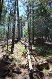Paesaggio nel lago canyon di legni, la contea di Coconino, Arizona, Stati Uniti fotografia stock libera da diritti