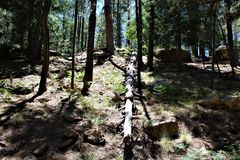 Paesaggio nel lago canyon di legni, la contea di Coconino, Arizona, Stati Uniti immagine stock