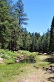 Paesaggio nel lago canyon di legni, la contea di Coconino, Arizona, Stati Uniti fotografia stock