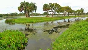 Paesaggio nel lago Taylor Florida Immagini Stock Libere da Diritti