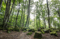 paesaggio nel Paese Basco immagine stock libera da diritti