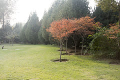 Paesaggio nel parco Fotografie Stock
