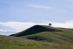 Paesaggio nel parco nazionale di Custer Fotografia Stock