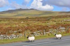 Paesaggio nel parco nazionale di Dartmoor, Devon, Inghilterra fotografie stock