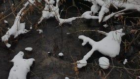 Paesaggio nell'acqua corrente di inverno della natura di legni, piccolo fiume dell'insenatura nella neve Fotografie Stock