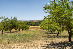 Paesaggio nell'Aragona ad estate Immagini Stock Libere da Diritti