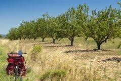 Paesaggio nell'Aragona ad estate Immagine Stock