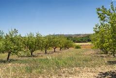 Paesaggio nell'Aragona ad estate Immagini Stock