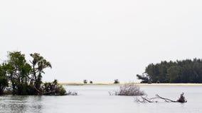 Paesaggio nell'estuario di Kallady, Sri Lanka immagine stock libera da diritti