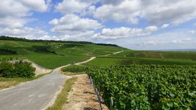 Paesaggio nella regione del champagne immagini stock libere da diritti
