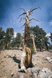 Paesaggio nella sierra Nevada Mountains Fotografia Stock