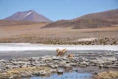Paesaggio nelle Ande della Bolivia Immagini Stock
